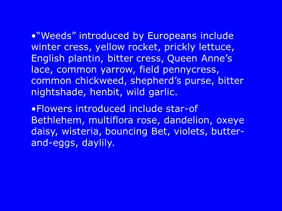 """Weeds"" introduced by Europeans include winter cress, yellow rocket, prickly lettuce, English plantin, bitter cress, Queen Anne's lace, common yarrow,"