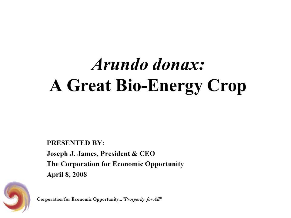 Arundo donax: A Great Bio-Energy Crop PRESENTED BY: Joseph J.