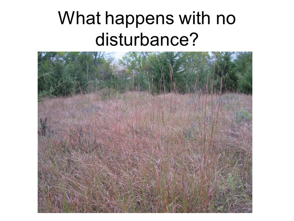 What happens with no disturbance