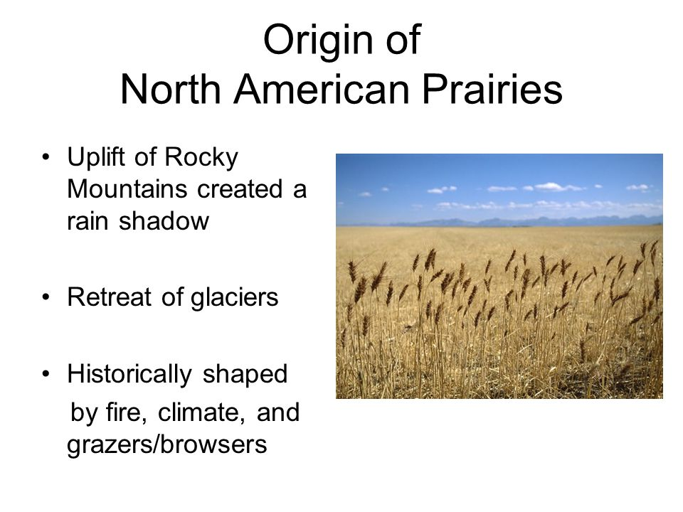 Origin of North American Prairies Uplift of Rocky Mountains created a rain shadow Retreat of glaciers Historically shaped by fire, climate, and grazers/browsers http://www.birdcanada.com/2009/11/a-whole-lot-of-empty /
