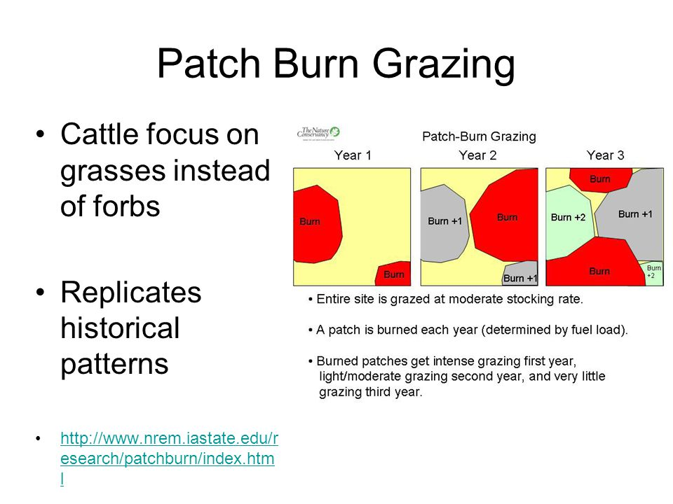 Patch Burn Grazing Cattle focus on grasses instead of forbs Replicates historical patterns http://www.nrem.iastate.edu/r esearch/patchburn/index.htm lhttp://www.nrem.iastate.edu/r esearch/patchburn/index.htm l
