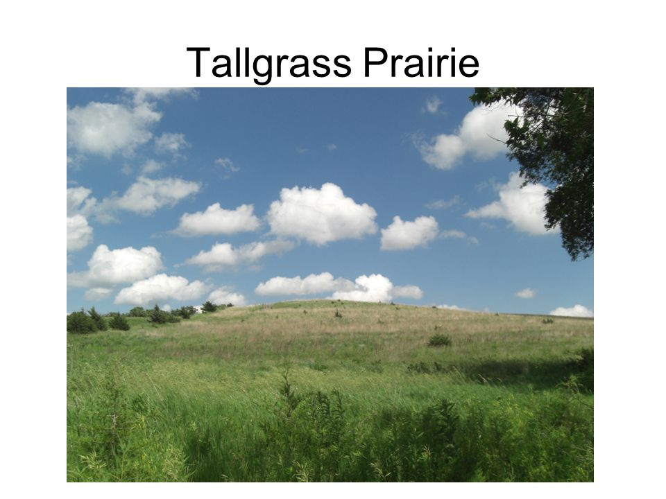 Mixed Grass Prairie