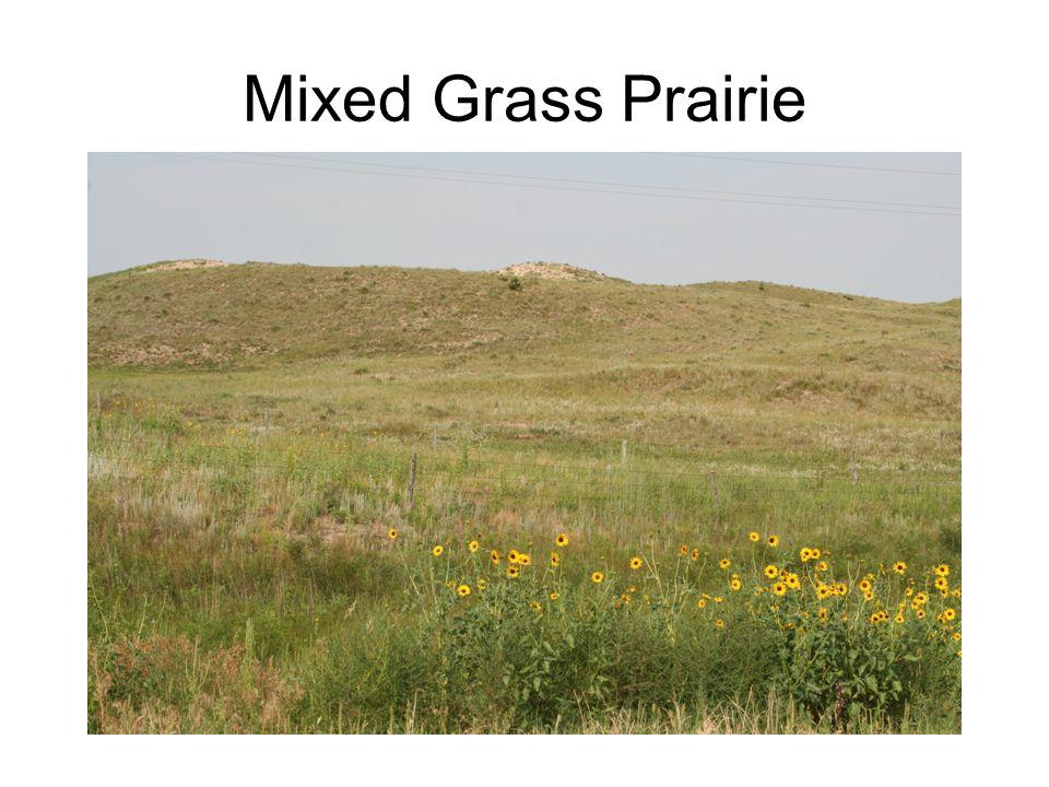 Shortgrass Prairie