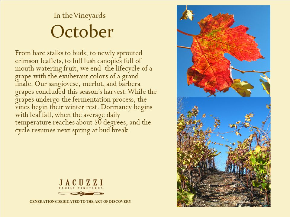GENERATIONS DEDICATED TO THE ART OF DISCOVERY In the Vineyards From bare stalks to buds, to newly sprouted crimson leaflets, to full lush canopies full of mouth watering fruit, we end the lifecycle of a grape with the exuberant colors of a grand finale.