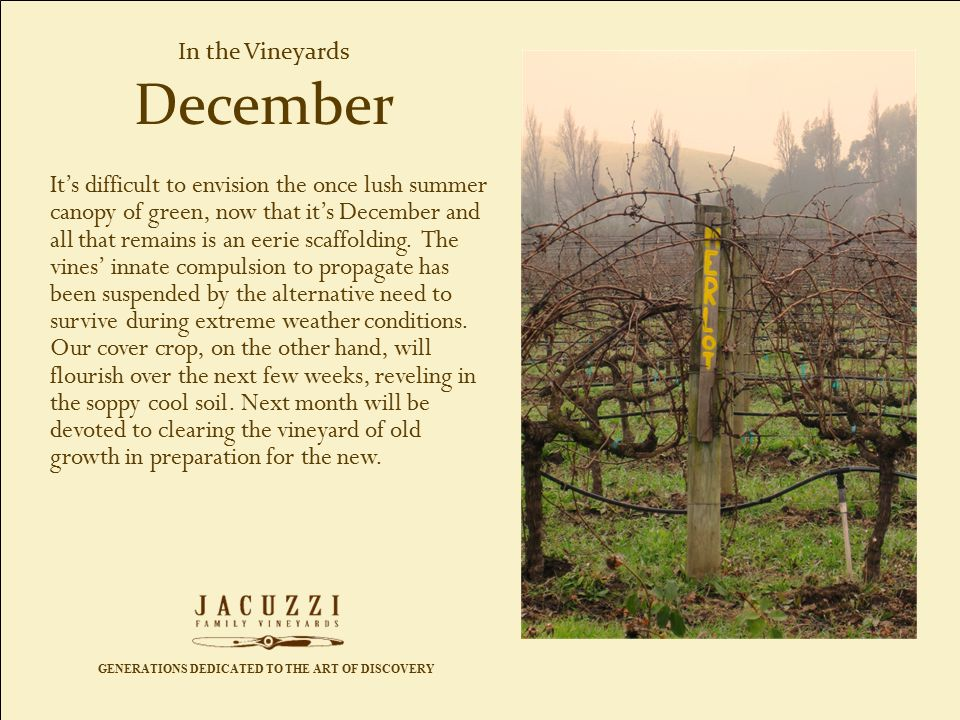 GENERATIONS DEDICATED TO THE ART OF DISCOVERY In the Vineyards It's difficult to envision the once lush summer canopy of green, now that it's December and all that remains is an eerie scaffolding.