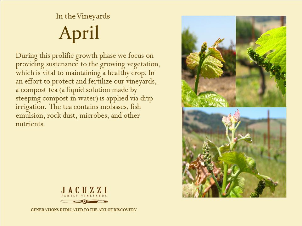 GENERATIONS DEDICATED TO THE ART OF DISCOVERY In the Vineyards During this prolific growth phase we focus on providing sustenance to the growing vegetation, which is vital to maintaining a healthy crop.