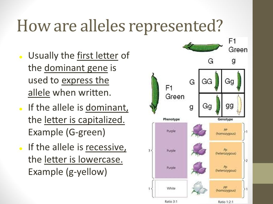 How are alleles represented? Usually the first letter of the dominant gene is used to express the allele when written. If the allele is dominant, the