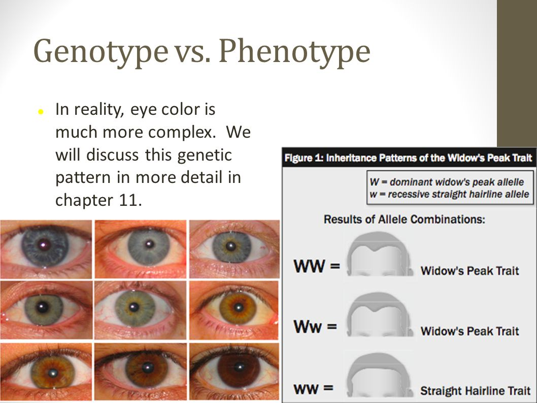 In reality, eye color is much more complex.