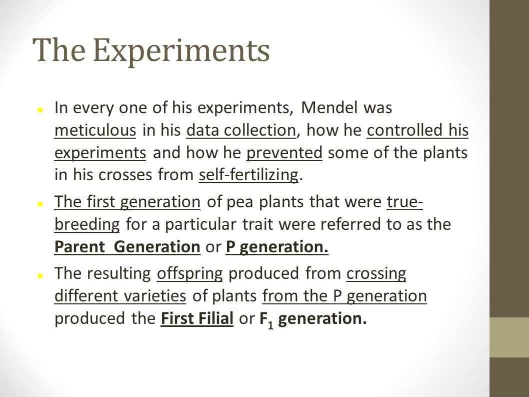 The Experiments In every one of his experiments, Mendel was meticulous in his data collection, how he controlled his experiments and how he prevented