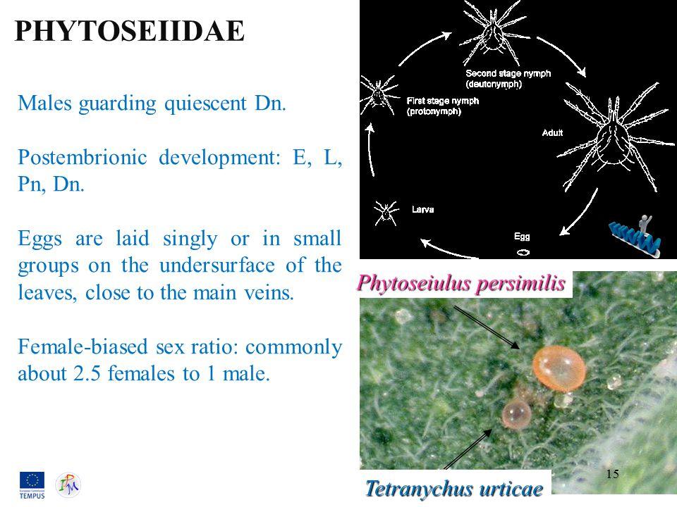 Males guarding quiescent Dn. Postembrionic development: E, L, Pn, Dn.