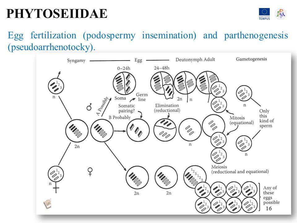 Egg fertilization (podospermy insemination) and parthenogenesis (pseudoarrhenotocky).