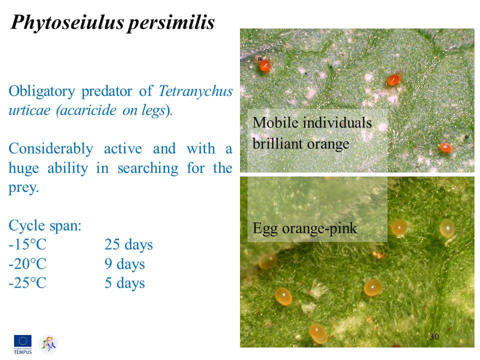 Phytoseiulus persimilis Mobile individuals brilliant orange Egg orange-pink Obligatory predator of Tetranychus urticae (acaricide on legs).
