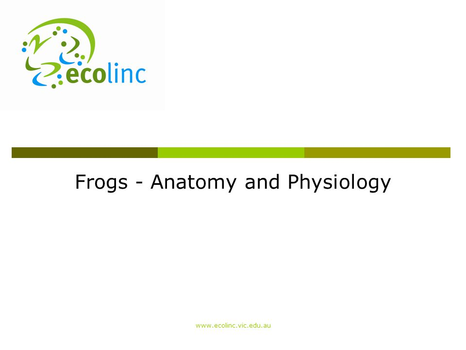 Frogs - Anatomy and Physiology www.ecolinc.vic.edu.au