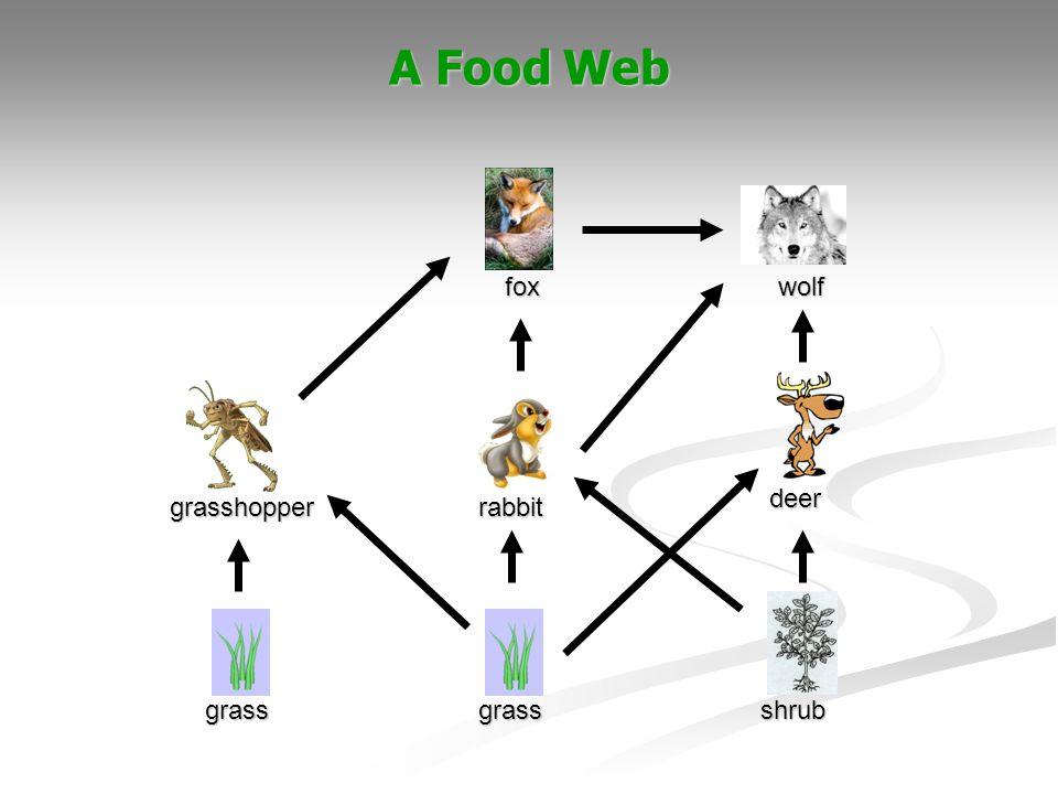 A Food Web rabbit grass fox shrub deer wolf grasshopper grass