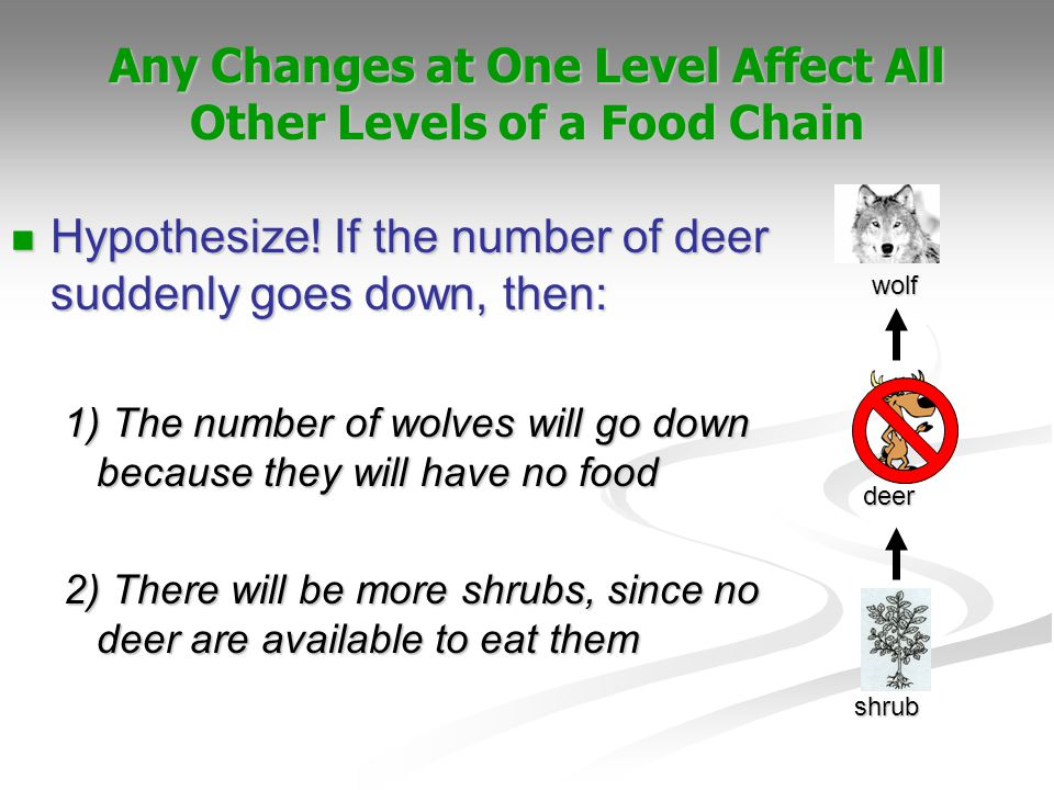 Any Changes at One Level Affect All Other Levels of a Food Chain shrub deer wolf Hypothesize! If the number of deer suddenly goes down, then: Hypothes