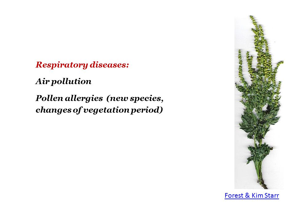 Respiratory diseases: Air pollution Pollen allergies (new species, changes of vegetation period) Forest & Kim Starr