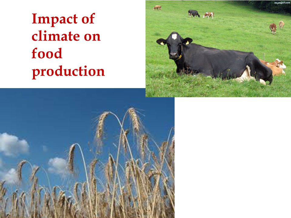Impact of climate on food production