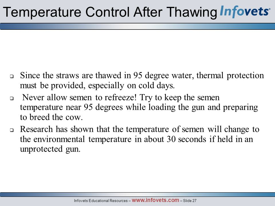 Infovets Educational Resources – www.infovets.com – Slide 27 Temperature Control After Thawing  Since the straws are thawed in 95 degree water, thermal protection must be provided, especially on cold days.