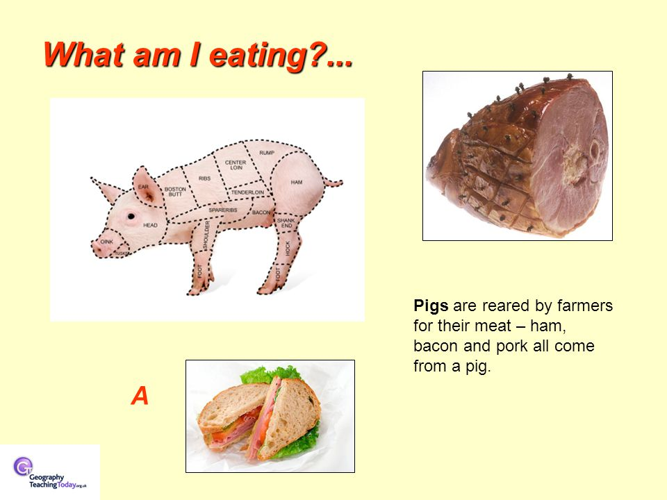What am I eating?... A Pigs are reared by farmers for their meat – ham, bacon and pork all come from a pig.