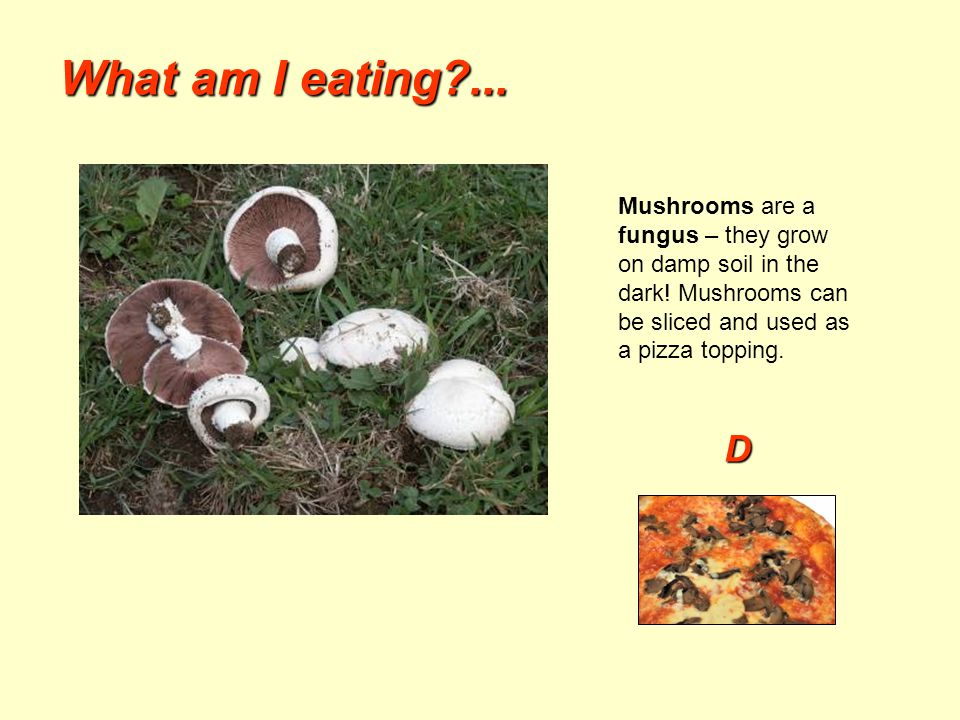 What am I eating?... Mushrooms are a fungus – they grow on damp soil in the dark! Mushrooms can be sliced and used as a pizza topping. D