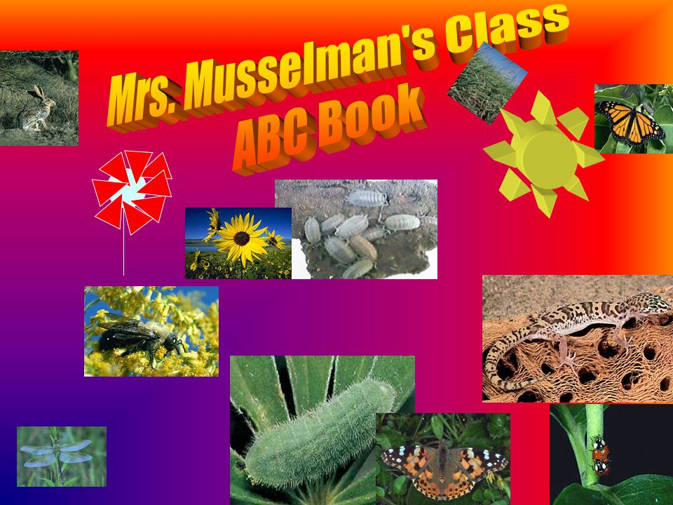 This ABC book was created by Mrs.Musselman's 2004/2005 third grade class.