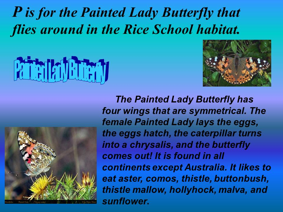 P is for the Painted Lady Butterfly that flies around in the Rice School habitat.