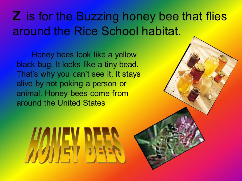 Z is for the Buzzing honey bee that flies around the Rice School habitat.