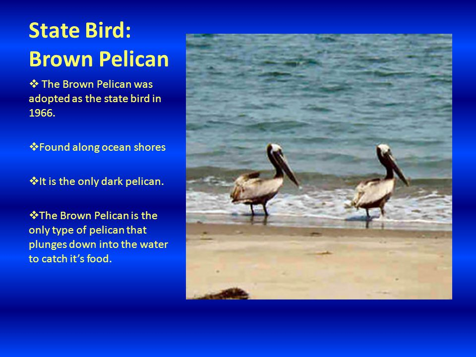 State Bird: Brown Pelican  The Brown Pelican was adopted as the state bird in 1966.