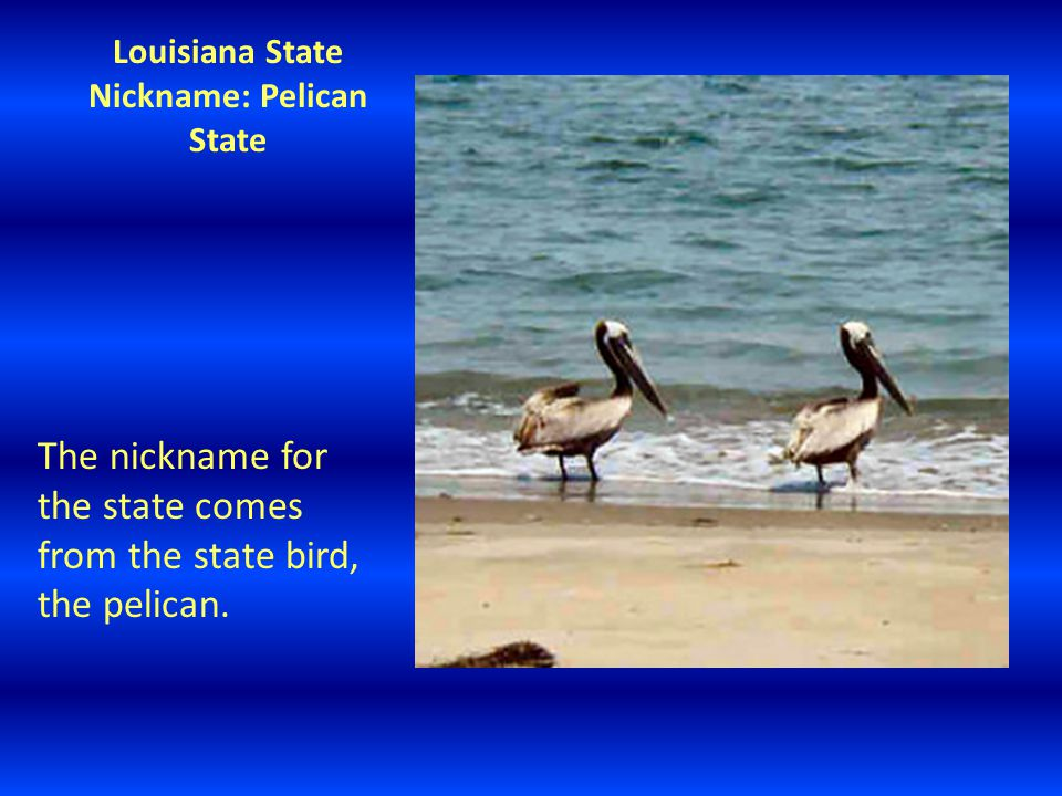 Louisiana State Nickname: Pelican State The nickname for the state comes from the state bird, the pelican.