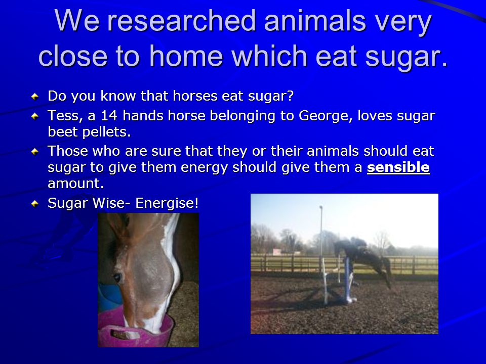We researched animals very close to home which eat sugar.