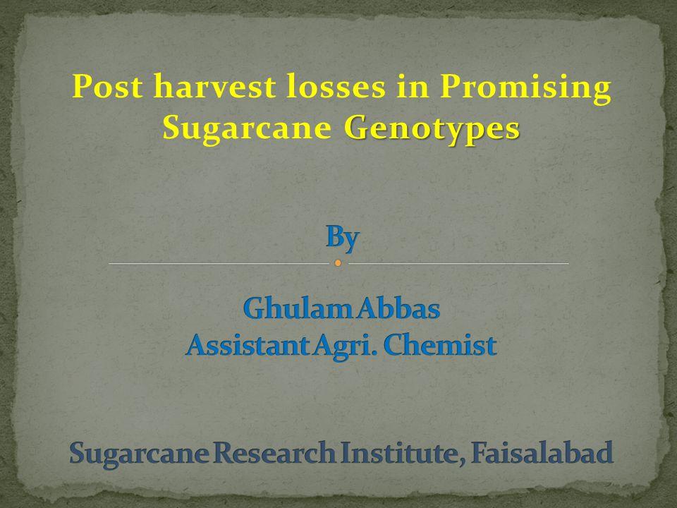 Genotypes Post harvest losses in Promising Sugarcane Genotypes