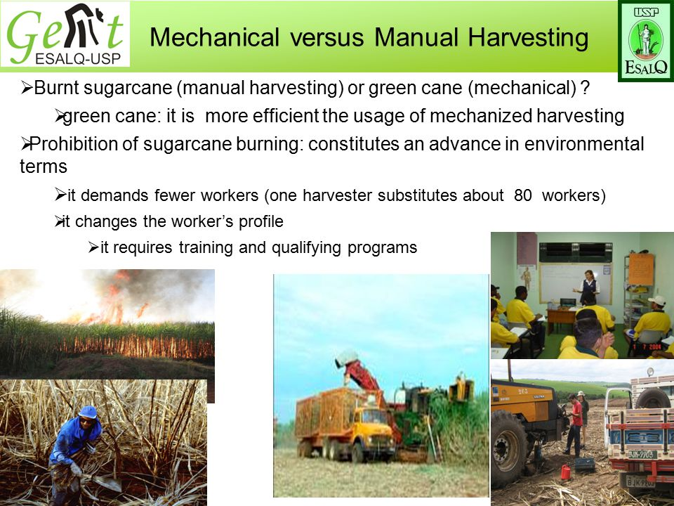 Mechanical versus Manual Harvesting  Burnt sugarcane (manual harvesting) or green cane (mechanical) .