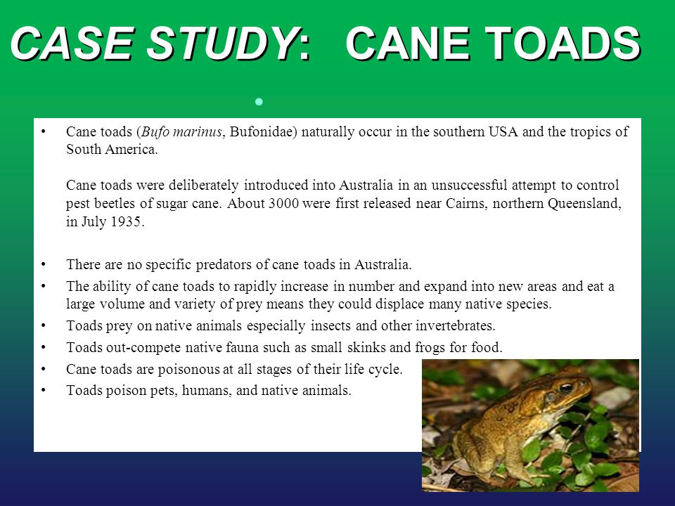CASE STUDY:CANE TOADS Cane toads (Bufo marinus, Bufonidae) naturally occur in the southern USA and the tropics of South America. Cane toads were delib