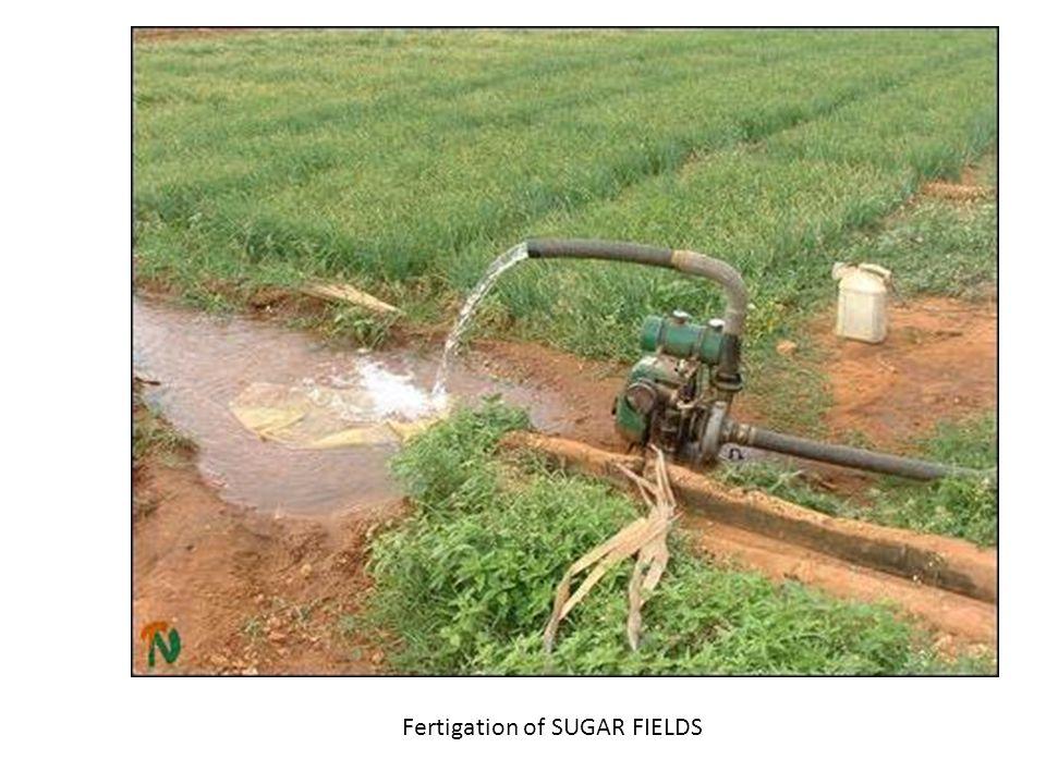 Fertigation of SUGAR FIELDS