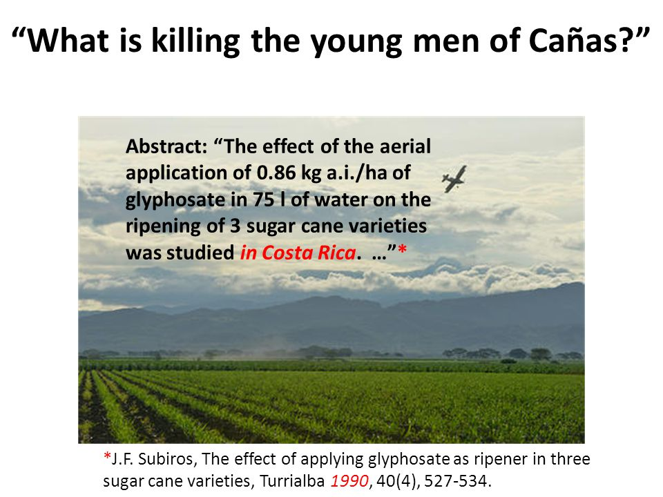 What is killing the young men of Cañas? Abstract: The effect of the aerial application of 0.86 kg a.i./ha of glyphosate in 75 l of water on the ripening of 3 sugar cane varieties was studied in Costa Rica.