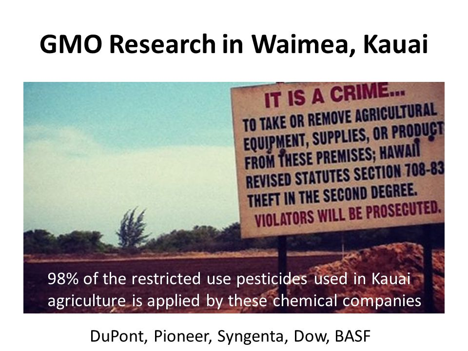 GMO Research in Waimea, Kauai DuPont, Pioneer, Syngenta, Dow, BASF 98% of the restricted use pesticides used in Kauai agriculture is applied by these chemical companies
