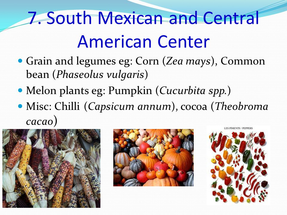 7. South Mexican and Central American Center Grain and legumes eg: Corn (Zea mays), Common bean (Phaseolus vulgaris) Melon plants eg: Pumpkin (Cucurbi