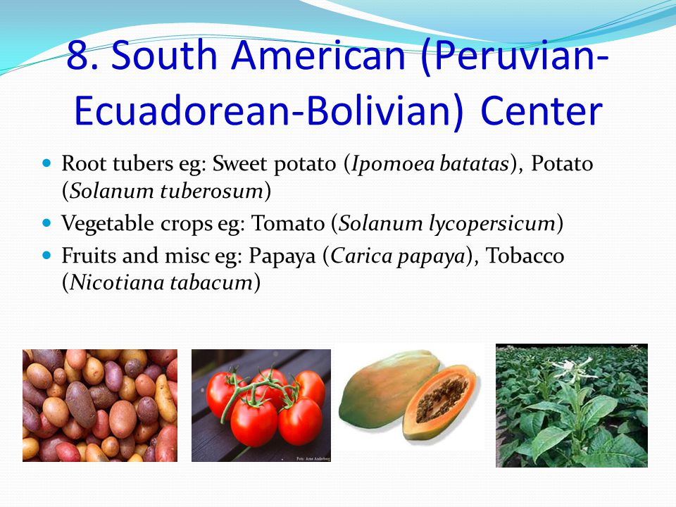 8. South American (Peruvian- Ecuadorean-Bolivian) Center Root tubers eg: Sweet potato (Ipomoea batatas), Potato (Solanum tuberosum) Vegetable crops eg