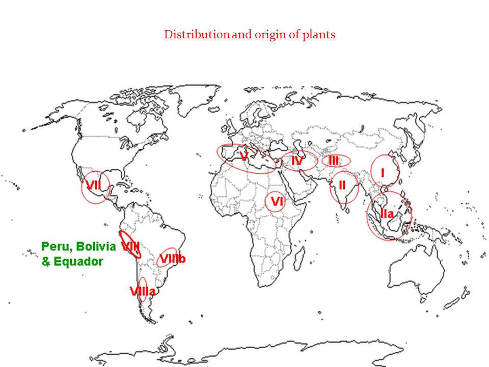 Distribution and origin of plants
