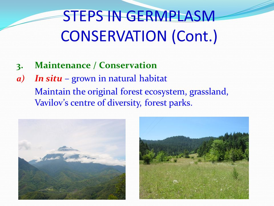 STEPS IN GERMPLASM CONSERVATION (Cont.) 3.Maintenance / Conservation a) In situ – grown in natural habitat Maintain the original forest ecosystem, grassland, Vavilov's centre of diversity, forest parks.