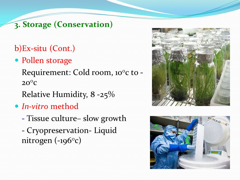 3. Storage (Conservation) b)Ex-situ (Cont.) Pollen storage Requirement: Cold room, 10 o c to - 20 o c Relative Humidity, 8 -25% In-vitro method - Tiss