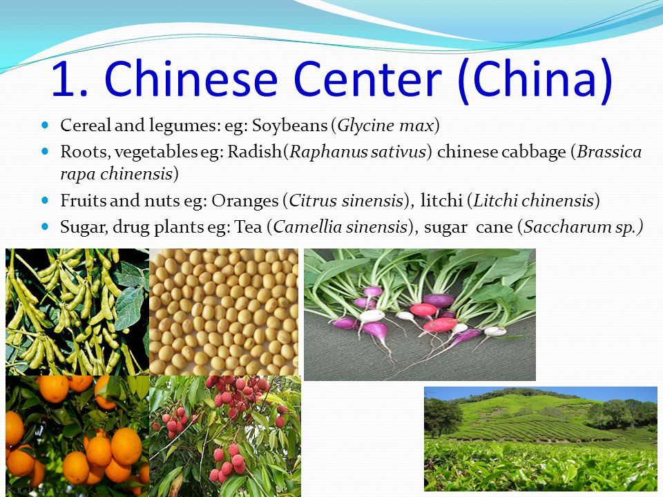 Cereal and legumes: eg: Soybeans (Glycine max) Roots, vegetables eg: Radish(Raphanus sativus) chinese cabbage (Brassica rapa chinensis) Fruits and nuts eg: Oranges (Citrus sinensis), litchi (Litchi chinensis) Sugar, drug plants eg: Tea (Camellia sinensis), sugar cane (Saccharum sp.) 1.