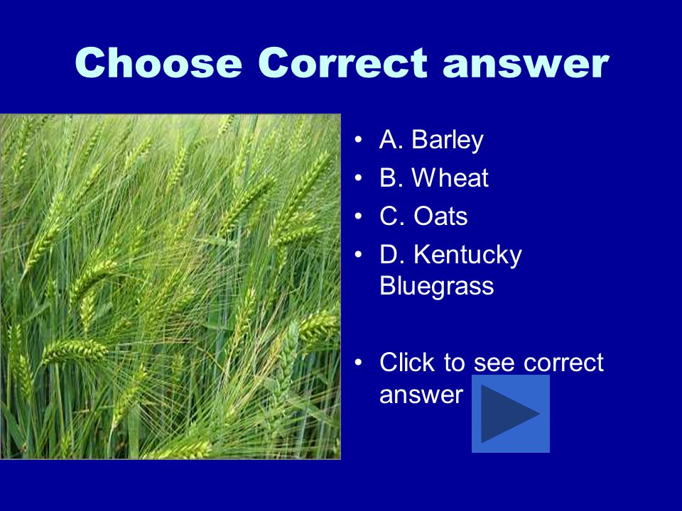 Choose Correct answer A. Barley B. Wheat C. Oats D. Kentucky Bluegrass Click to see correct answer