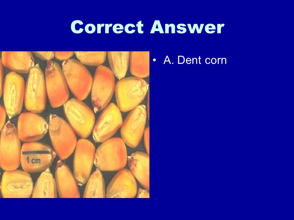 Correct Answer A. Dent corn