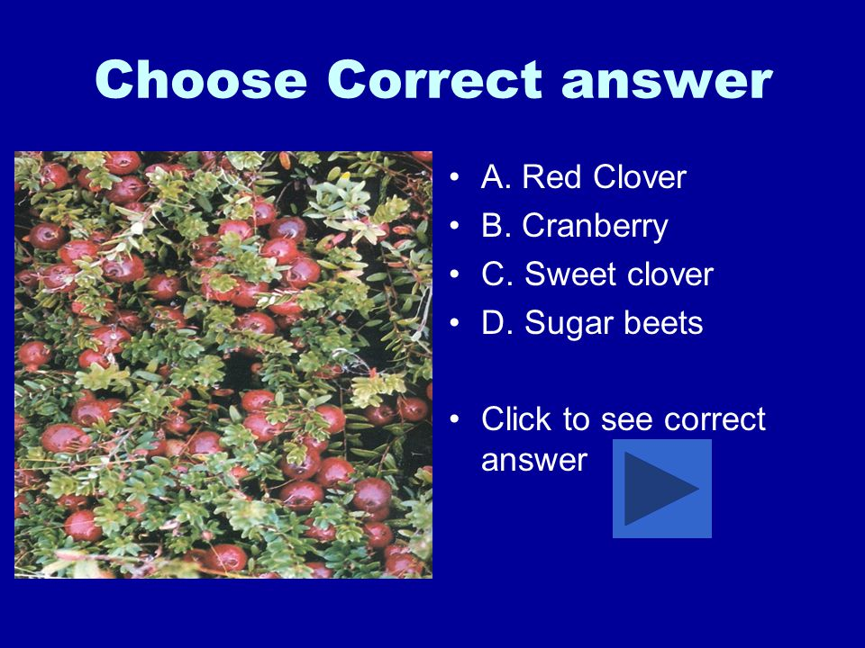 Choose Correct answer A.Red Clover B. Cranberry C.