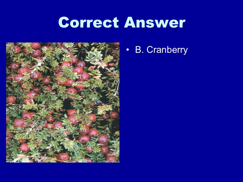 Correct Answer B. Cranberry