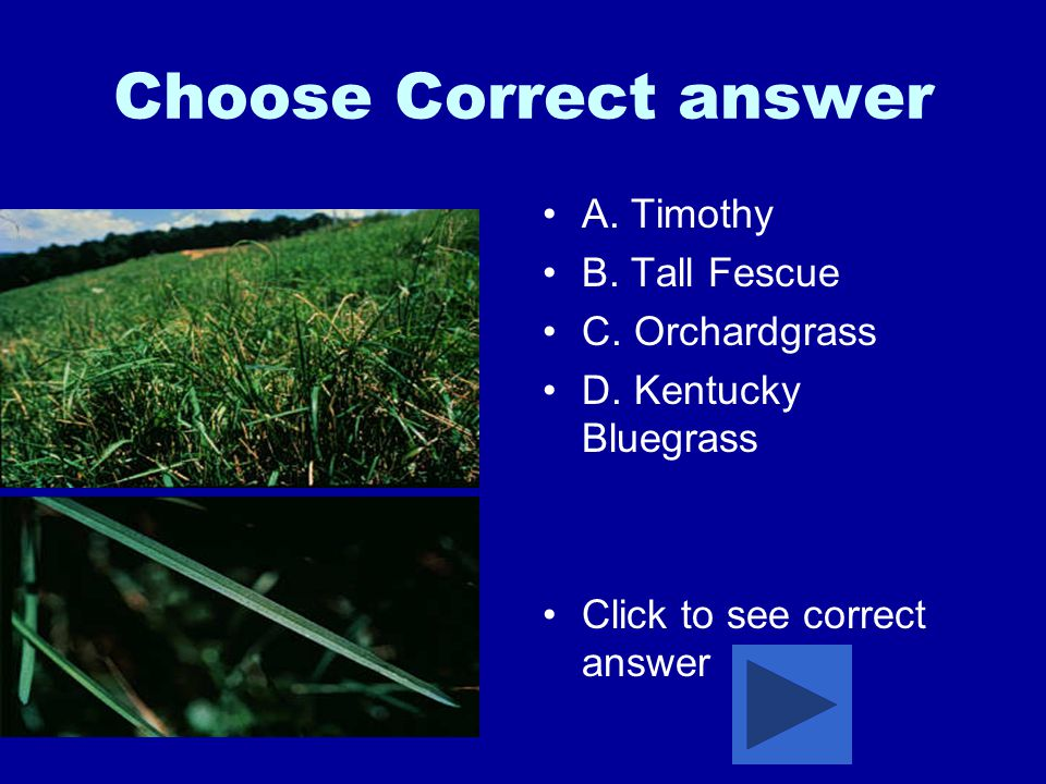 Choose Correct answer A.Timothy B. Tall Fescue C.