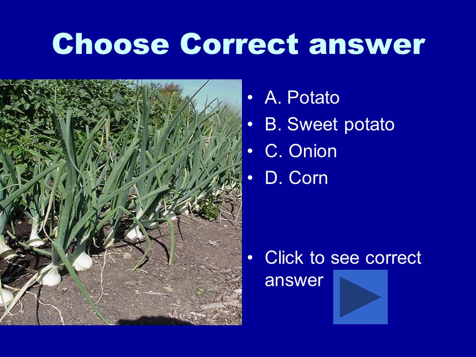 Choose Correct answer A. Potato B. Sweet potato C. Onion D. Corn Click to see correct answer