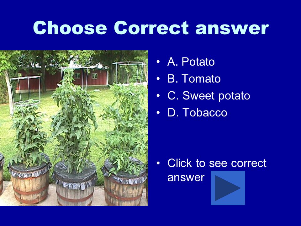 Choose Correct answer A. Potato B. Tomato C. Sweet potato D. Tobacco Click to see correct answer