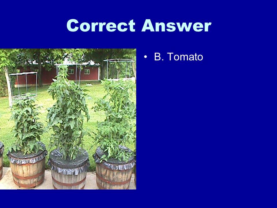 Correct Answer B. Tomato